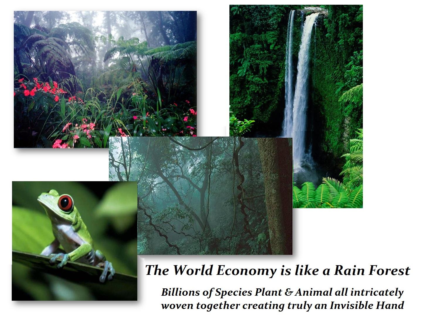 Rain Forest Economy