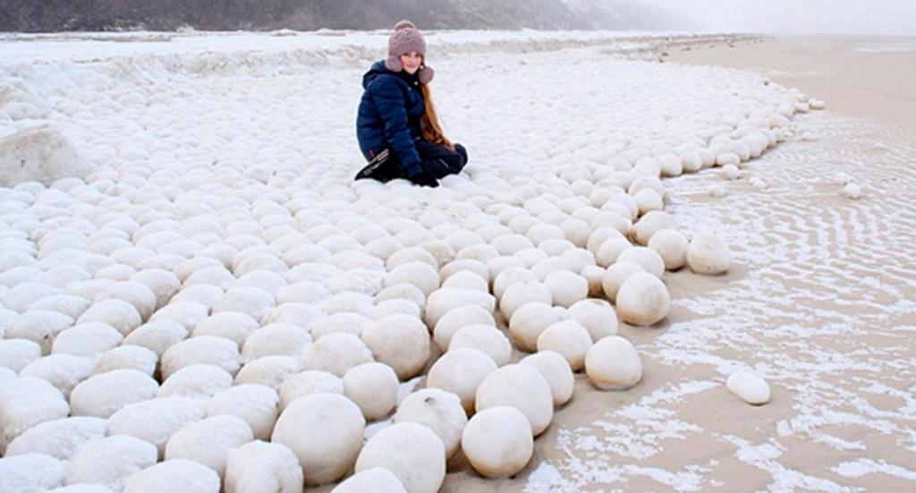 siberian-snowballs-1