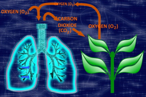 CO2-Cycle-300x200.jpg